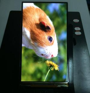 Tianma 5.5'' FHD AMOLED prototype photo